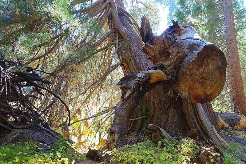 Foto aus dem Sequoia Nationalpark