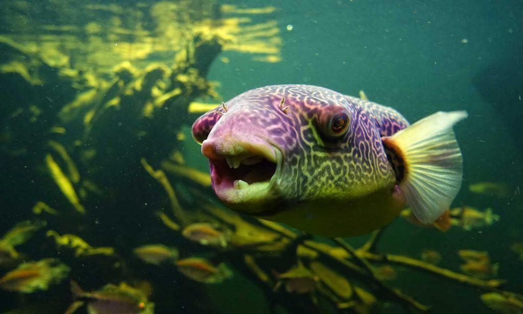 Foto von Fisch im Wasser