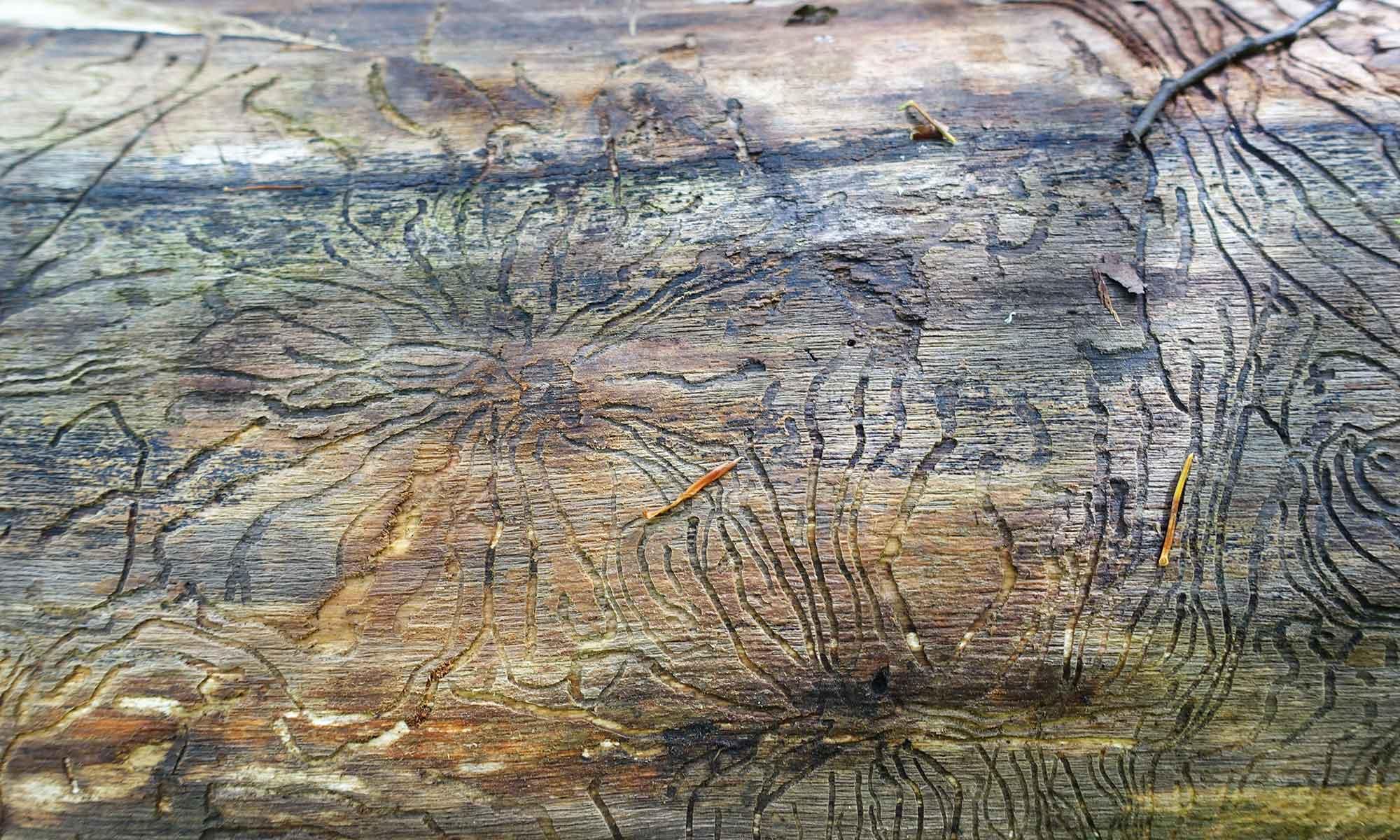 Bild Muster von Holzwurm