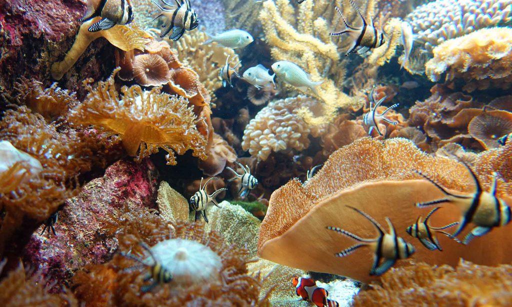 ein Blick ins Aquarium